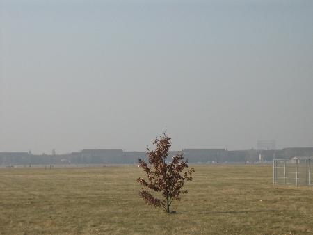 Baum auf Tempelhofer Feld