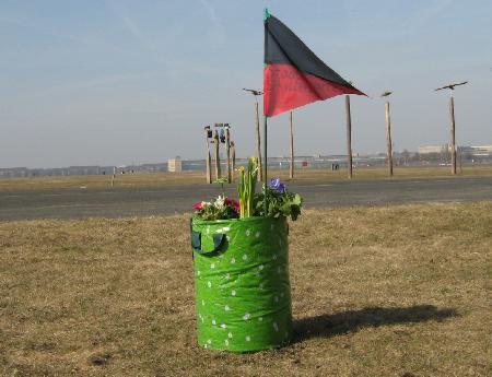Blumen auf dem Tempelhofer Feld