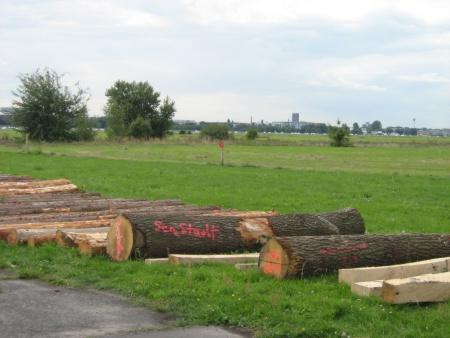 Baumstämme Tempelhofer Feld